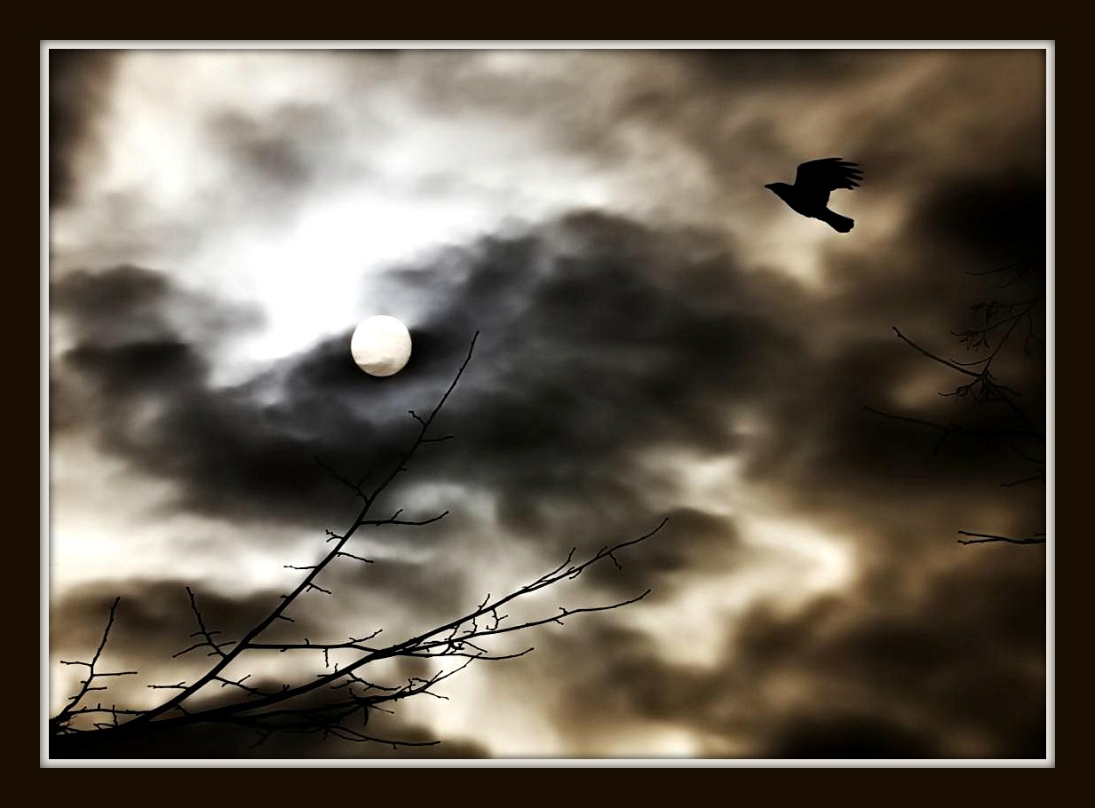 moon, bird, tree, clouds