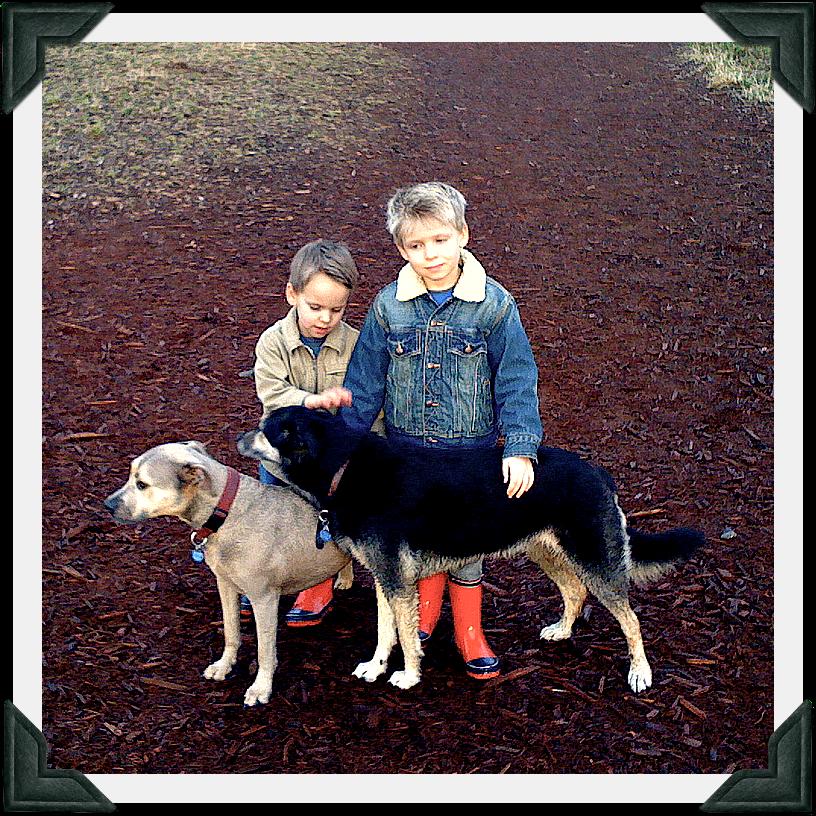 good dogs, pets, pit bull, kids, boys, husky, dog park