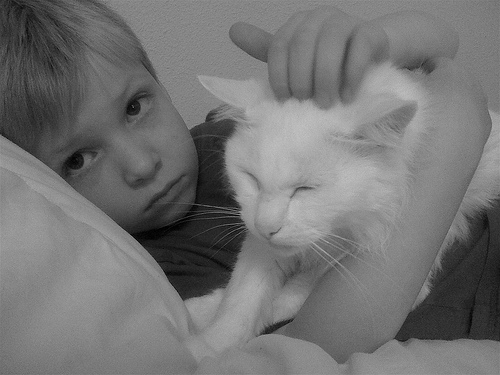 atticus, norman, cat, boy, pet